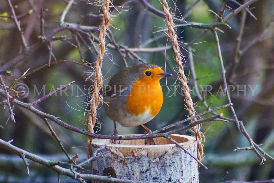 My friend Robin