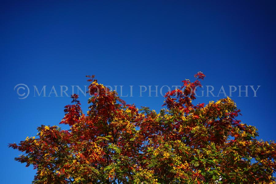 Autumn colours in the blue sky