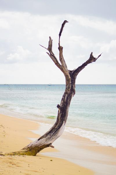 Lone tree on the beach